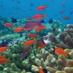 "Australia's Barrier Reef is explored in the PBS documentary ""Life on the Reef,"" newly released on Blu-ray and DVD. (PBS)"
