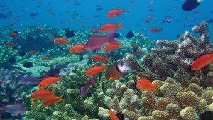 """Australia's Barrier Reef is explored in the PBS documentary """"Life on the Reef,"""" newly released on Blu-ray and DVD. (PBS)"""