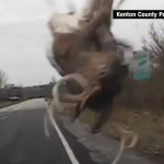 151201214912-kenton-county-police-deer-video-vstan-orig-pkg-aj-00001022-exlarge-tease