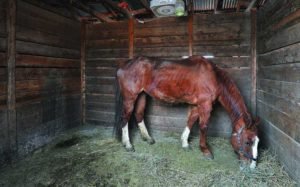 Bannock_Horses