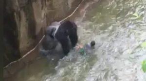 160529141703-boy-falls-into-gorilla-habitat-pkg-nr-00010114-overlay-tease