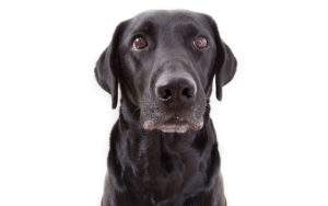 sad-dog-shutterstock