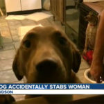 dog-stabbing-colorado-cnn