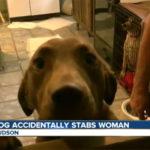 dog-stabbing-colorado-cnn