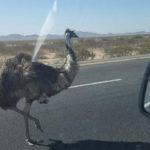 emu01